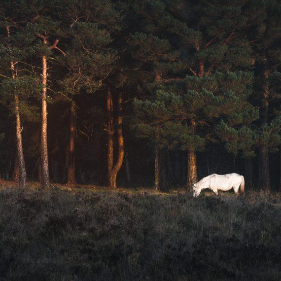 Marco Manzini - The White Horse