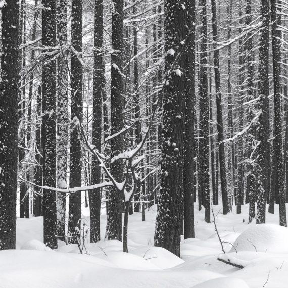 Marco Manzini - White Winter